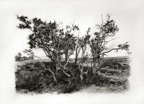 mike-stott-landskap-sandskap5